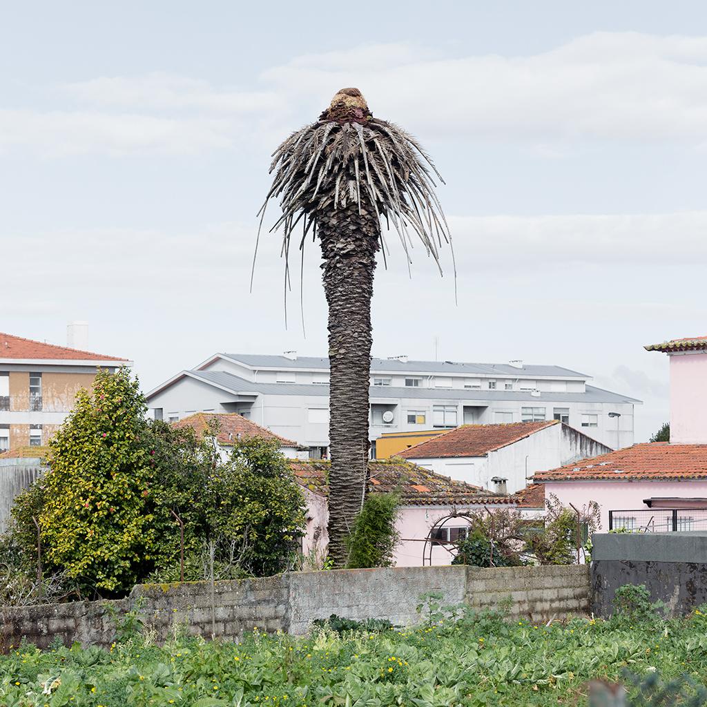 Dead Palms, Porto 2