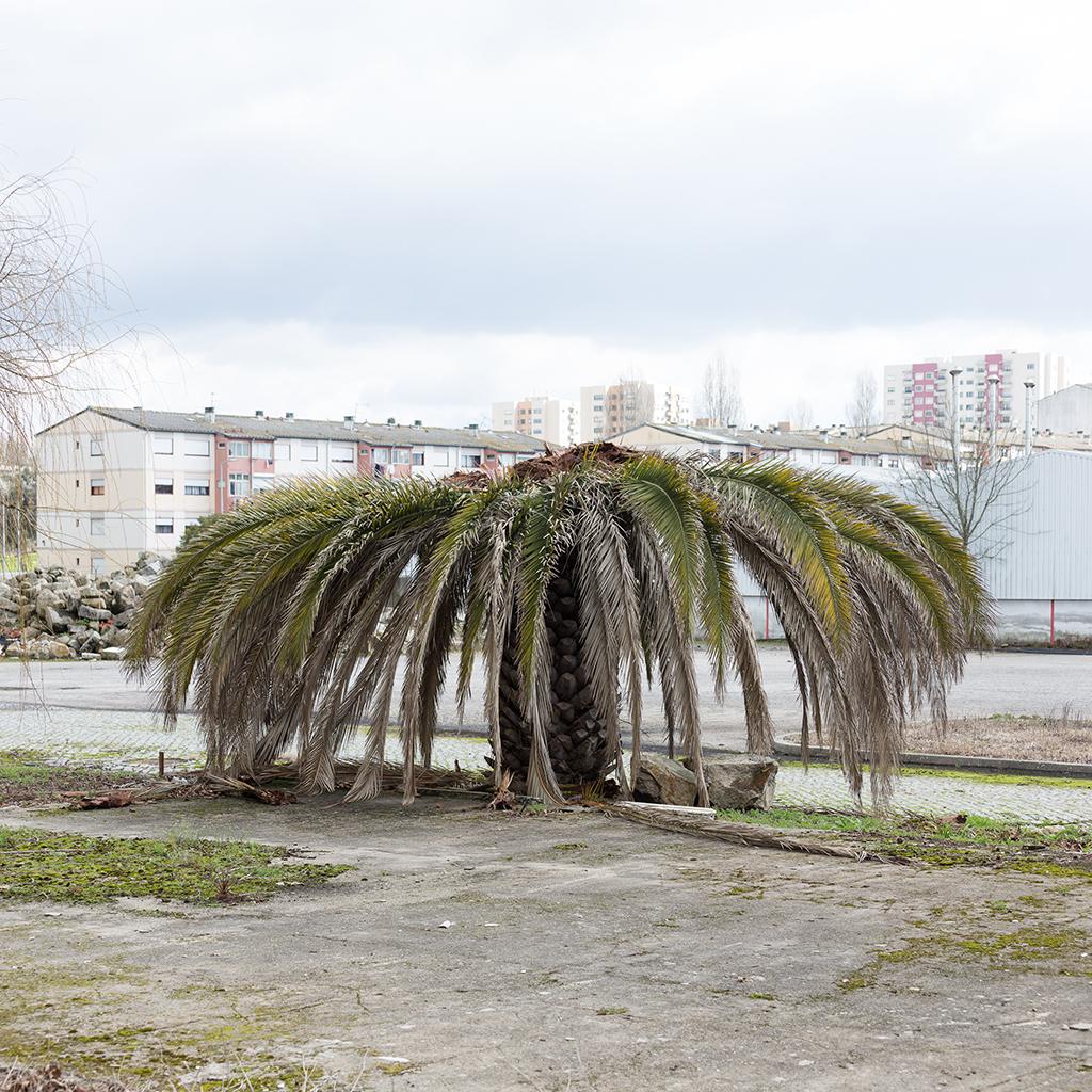 Dead Palms, Porto 5